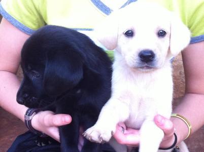 caspian puppy